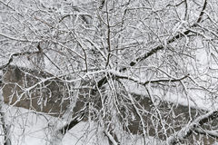 Frozen tree branches on winter. Royalty Free Stock Photo