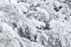 Frozen tree bruches Stock Photo