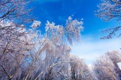 Frozen Tree Stock Photo