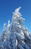Frozen tree with clear blue sky Stock Photography
