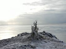 A frozen tree close to the lake royalty free stock photos