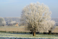 Frozen tree in the countryside. Frozen tree in the belgian countryside. The branches are white on the soft blue sky stock photo