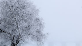 A frozen tree covered with frost Stock Photos