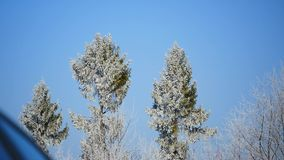 Frozen tree crown on blue sky background stock video footage