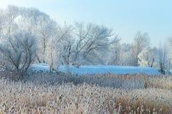Frozen tree on field under sunlight Royalty Free Stock Photography