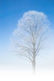 Frozen tree frosty twigs on snowbound snowfield scene Stock Photography