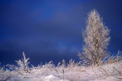 Frozen tree and grass. Mystical landscape with frozen russian winter about -40 C degrees - very cold weather. Snow on the frozen trees and grass royalty free stock images