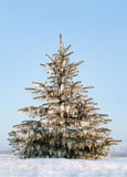 Frozen tree after ice storm Royalty Free Stock Photo