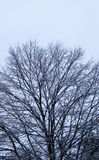 Frozen tree after ice storm. Royalty Free Stock Images