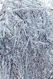 Frozen Tree after Icy Rain Royalty Free Stock Photos