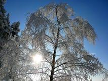 Frozen tree. In Krkonoše, Czech republic Royalty Free Stock Images