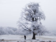 Frozen Tree With Man Royalty Free Stock Images
