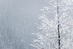 Frozen tree in the misty winter scenery Stock Images