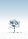 Frozen Tree On A Snowy Day Royalty Free Stock Photography