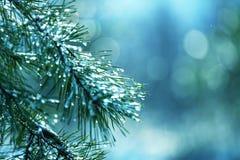 Frozen tree Stock Images
