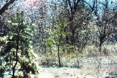 Frozen tree Royalty Free Stock Photos