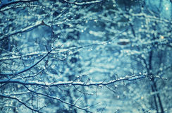 Frozen tree Stock Photography