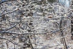 Frozen tree Royalty Free Stock Photo