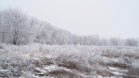 Frozen tree planting. Royalty Free Stock Photos