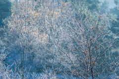 Frozen tree saplings with Autumn leaves Stock Photos