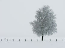 Frozen tree by the sea Stock Images