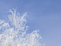 Frozen tree Royalty Free Stock Images