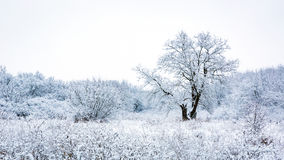 Frozen tree on snow-covered meadow Royalty Free Stock Photo