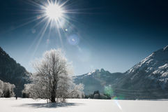 Frozen tree in a snow winter landscape Royalty Free Stock Image