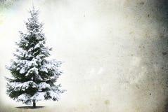 Frozen tree in snowy Royalty Free Stock Photos