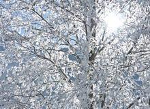 Frozen tree and sun Stock Photos