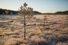 Frozen tree at swamp stock photos