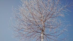 Frozen Tree Top. Upper view of frozen tree top in sunny winter day stock footage