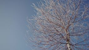 Frozen Tree Top. Upper view of frozen tree top in sunny winter day stock video footage