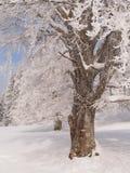 Frozen tree with trail mark. Jura mountain, France Royalty Free Stock Photo