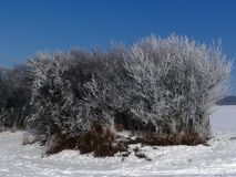 Frozen tree. S and bushes in the Czech Republic Stock Photo