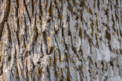 Frozen tree trunk close-up Royalty Free Stock Images