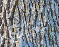 Frozen tree trunk close-up Royalty Free Stock Photo