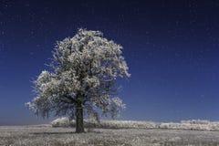 Frozen tree under winter stars Stock Images