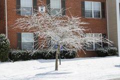 Frozen Tree Stock Image