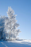 Frozen tree in winter Royalty Free Stock Image