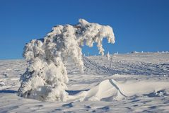 Frozen tree in winter Royalty Free Stock Photos