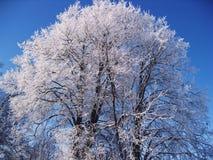 Frozen tree. Winter frozen tree Royalty Free Stock Image