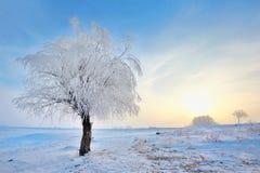 Frozen tree on winter field Royalty Free Stock Photography
