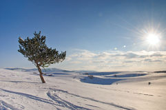 Frozen tree on winter field and blue sky Stock Image