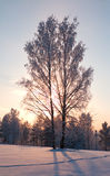 Frozen tree. Frozen tree on winter field and blue sky Stock Photo