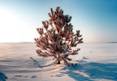 Frozen tree on winter field and blue sky Royalty Free Stock Image