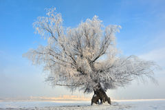 Frozen tree on winter field Stock Photography