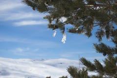 Frozen Tree. Winter holidays, Sunny day in Sierra Nevada, Granada Stock Photo