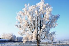 Tree covered with hoarfrost
