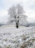 Frozen tree in winter with snow Royalty Free Stock Photography
